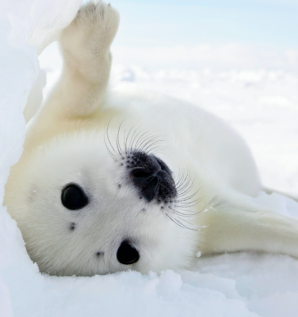 Mission accomplished for the 2018 seal pup...