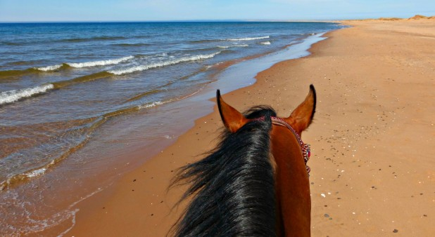 trail ride on the beach