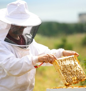 Honey producers