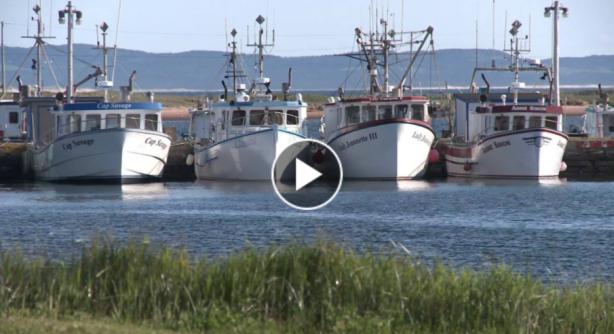 Vidéo Le Homard des Îles