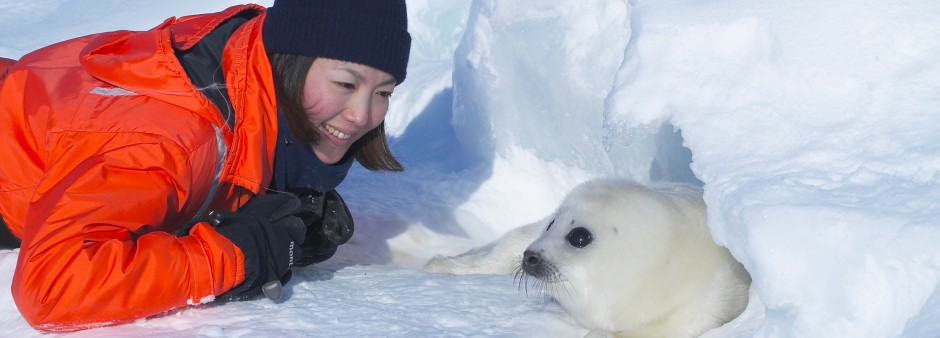 Harp seal observation best trip 2020 National Geographic